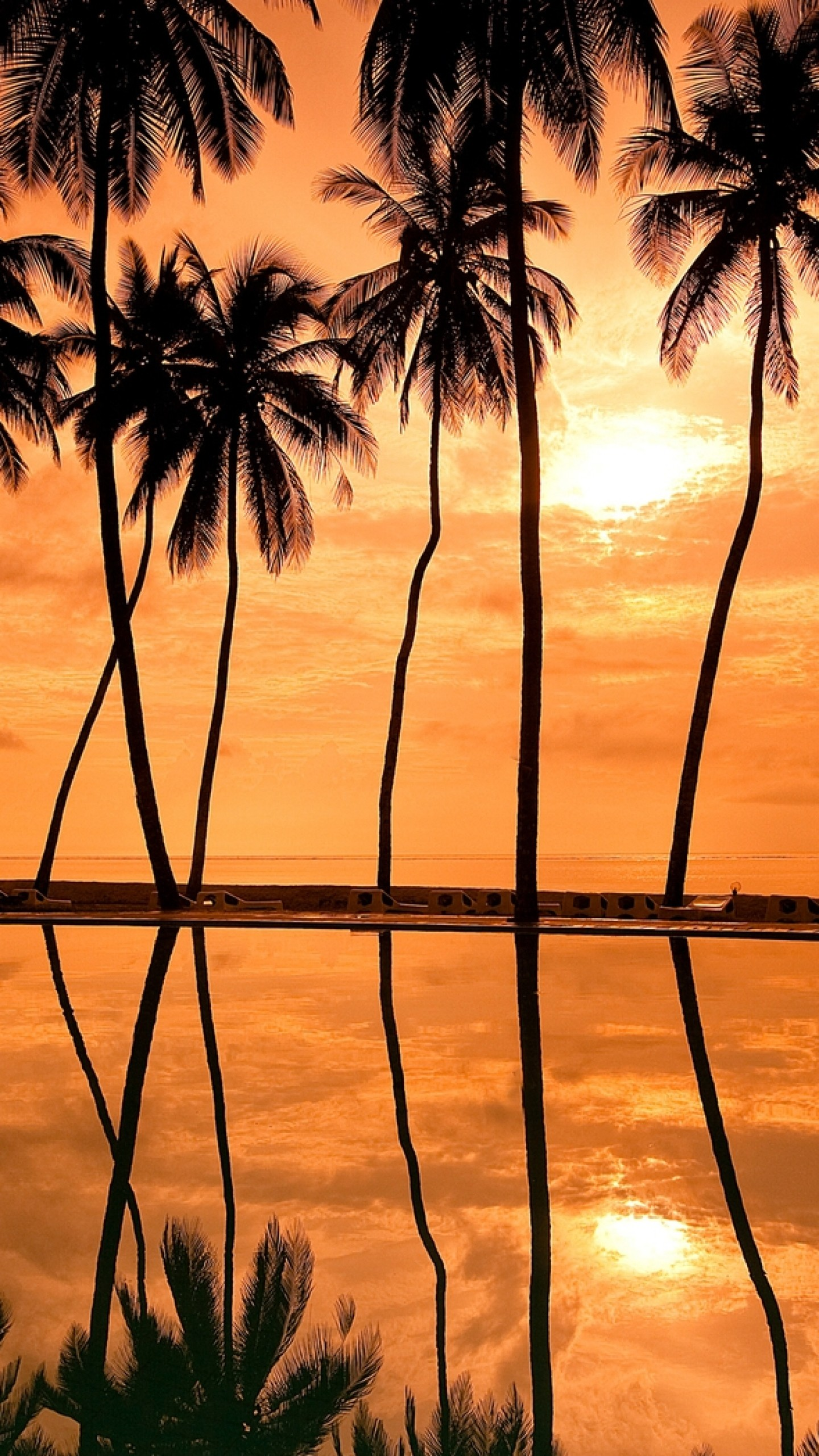 Preview wallpaper palm trees, decline, orange, outlines, hawaii 1440×2560
