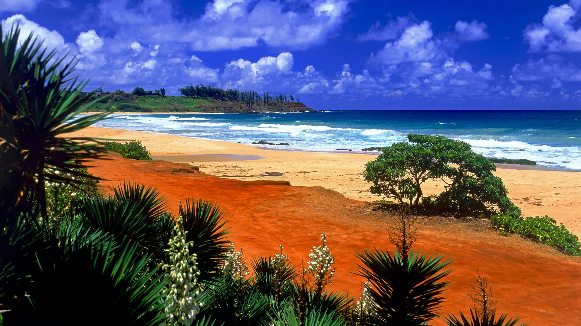 Beach Desktop Backgrounds and Wallpaper – Kealia Beach, Kauai, Hawaii .