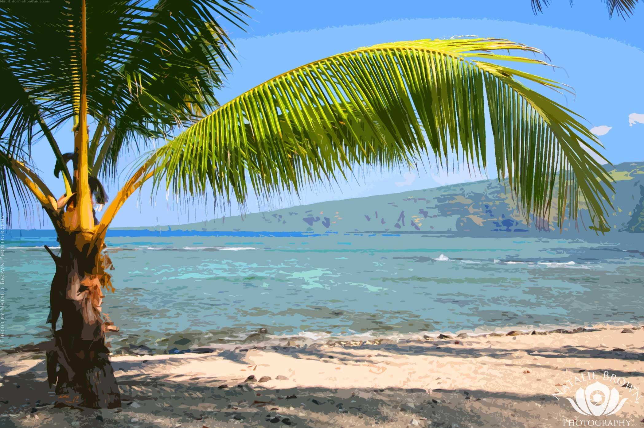 Makena Cove; Palm Tree