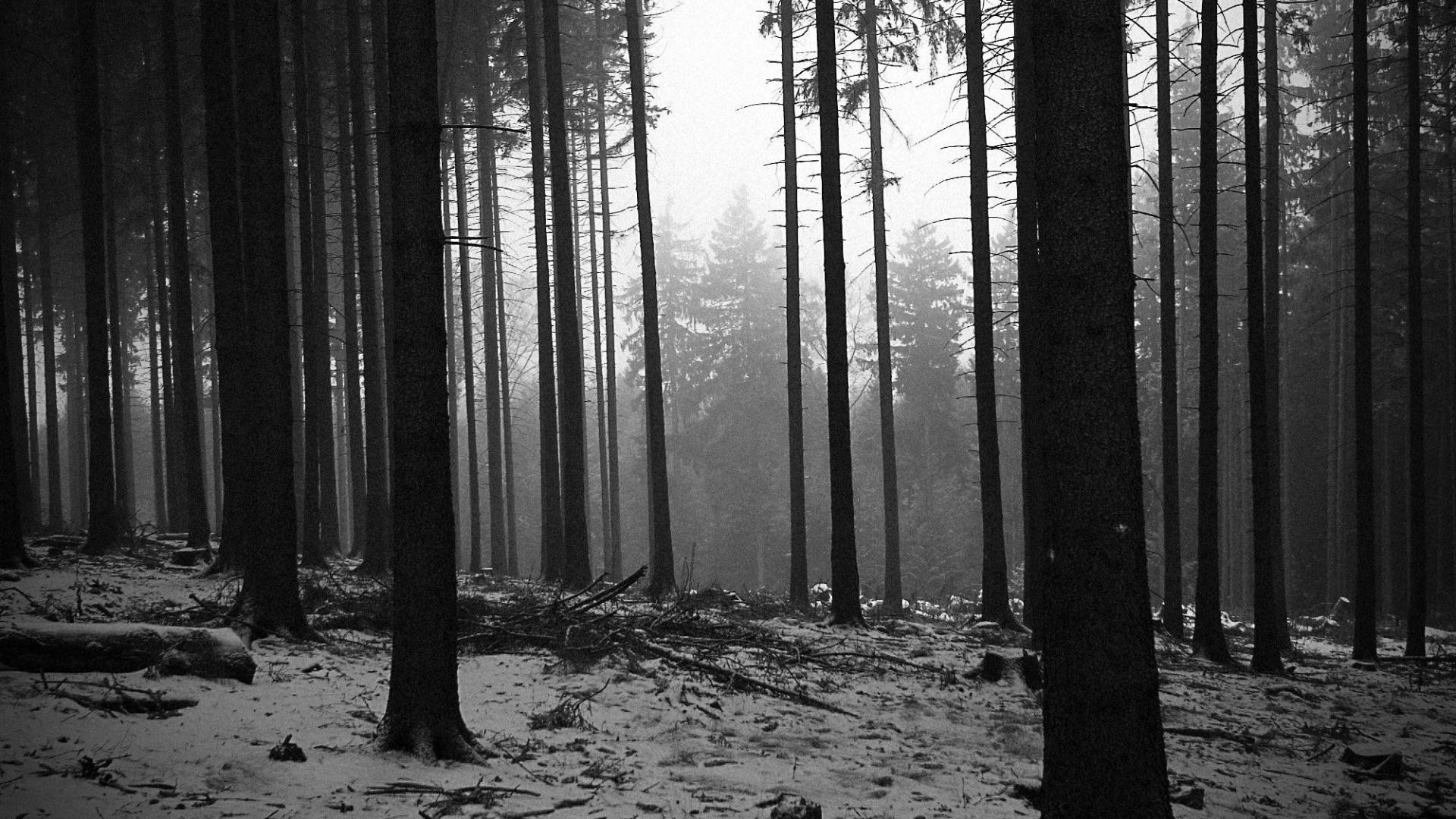 Black and white landscapes trees forest monochrome wallpaper | (39675)