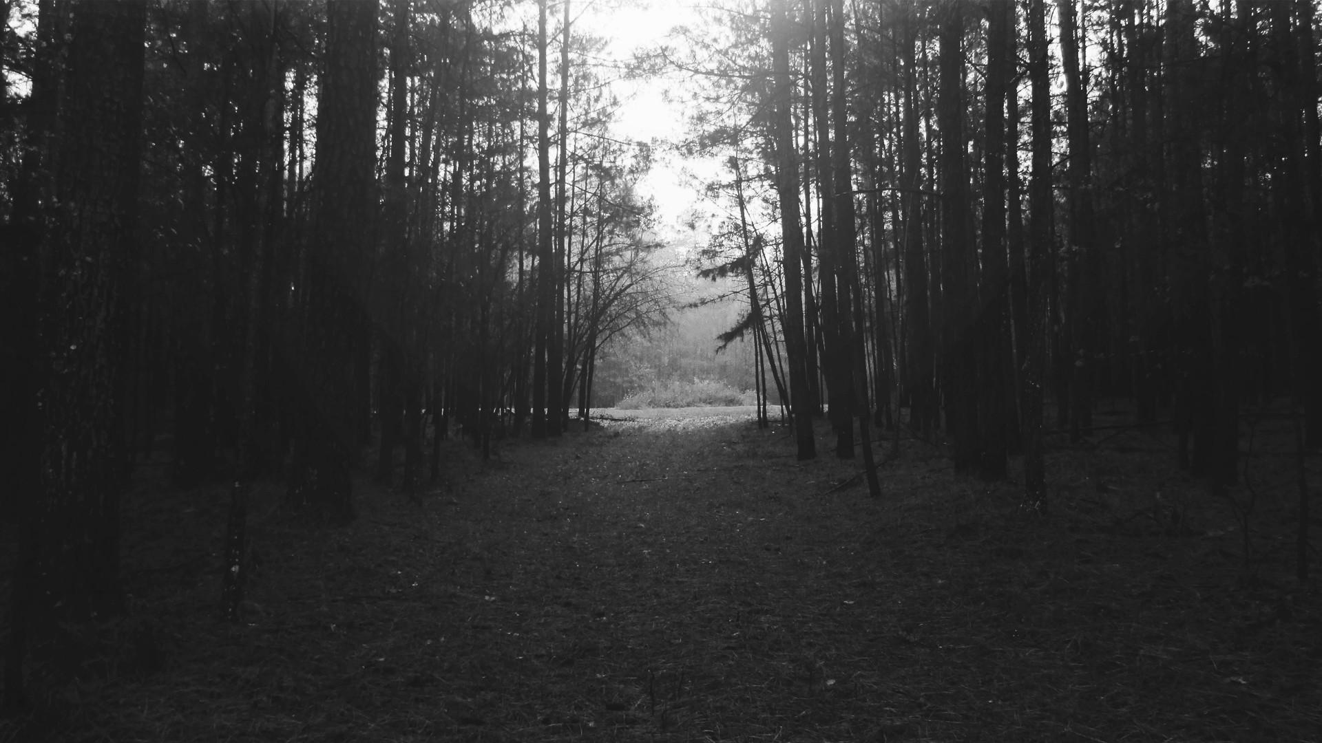 … black and white background wallpaper free download; black white trees  …