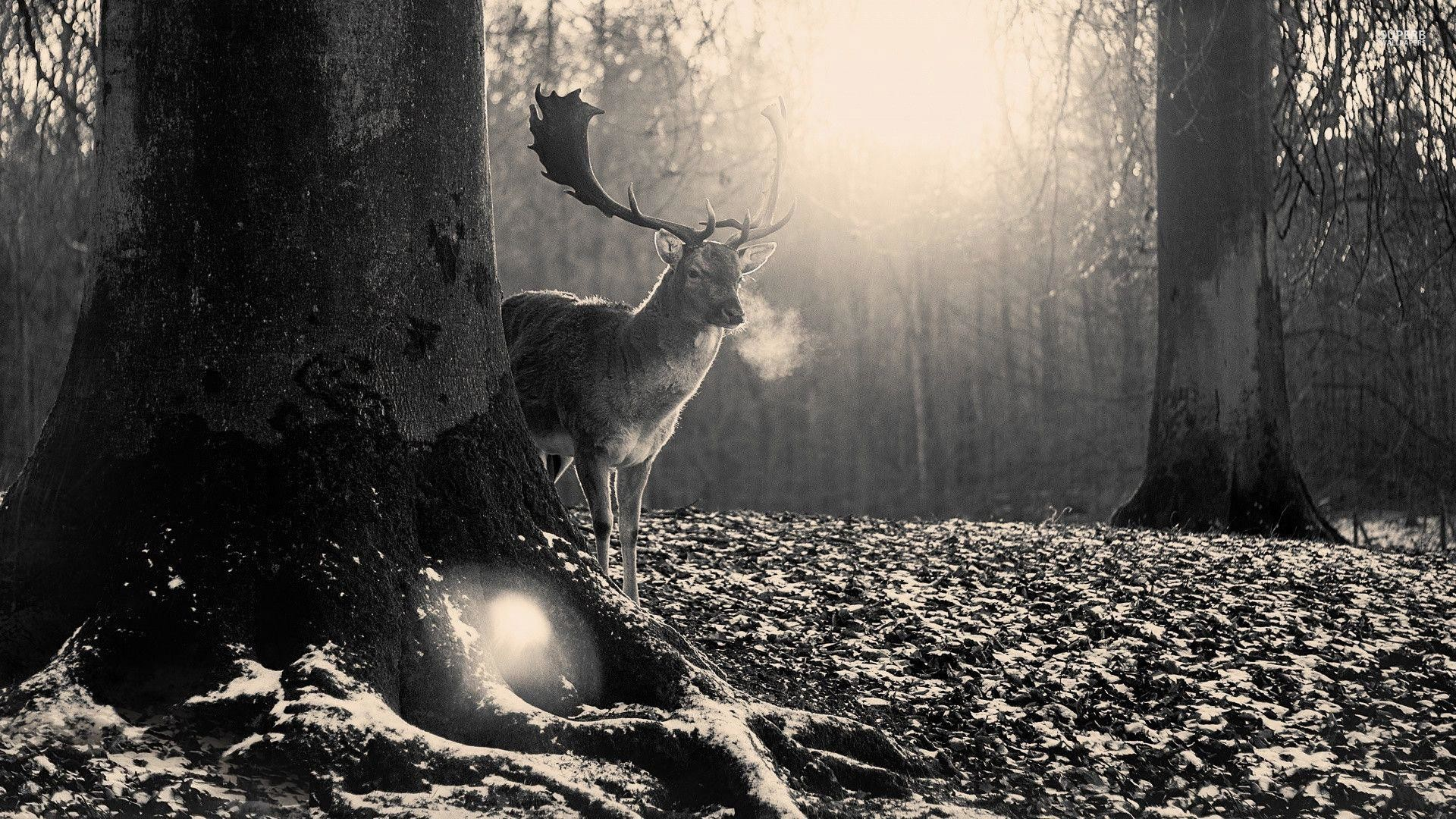 wallpaper.wiki-Image-of-Black-and-White-Forest-