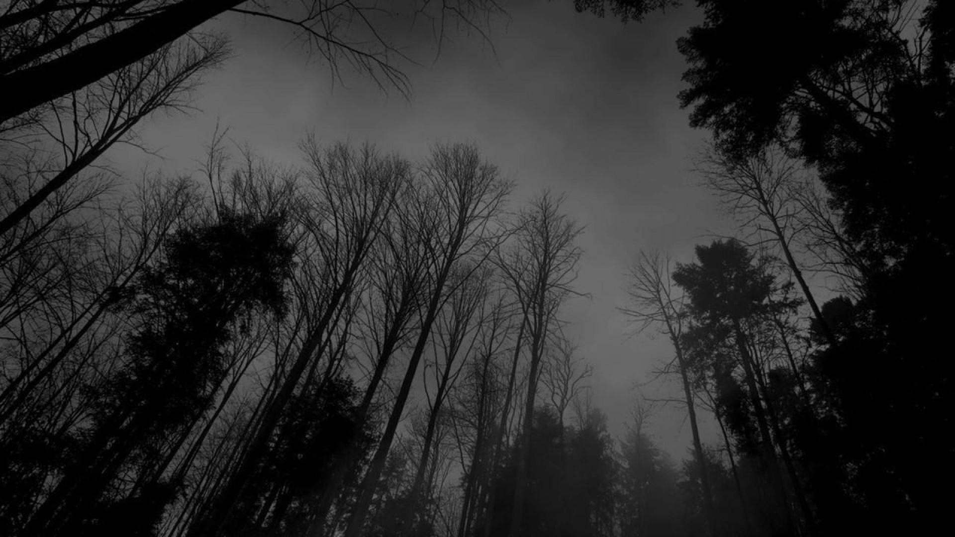 Image – Forest-black-white-dark-forest-wallpaper.jpg | Creepypasta Wiki |  FANDOM powered by Wikia