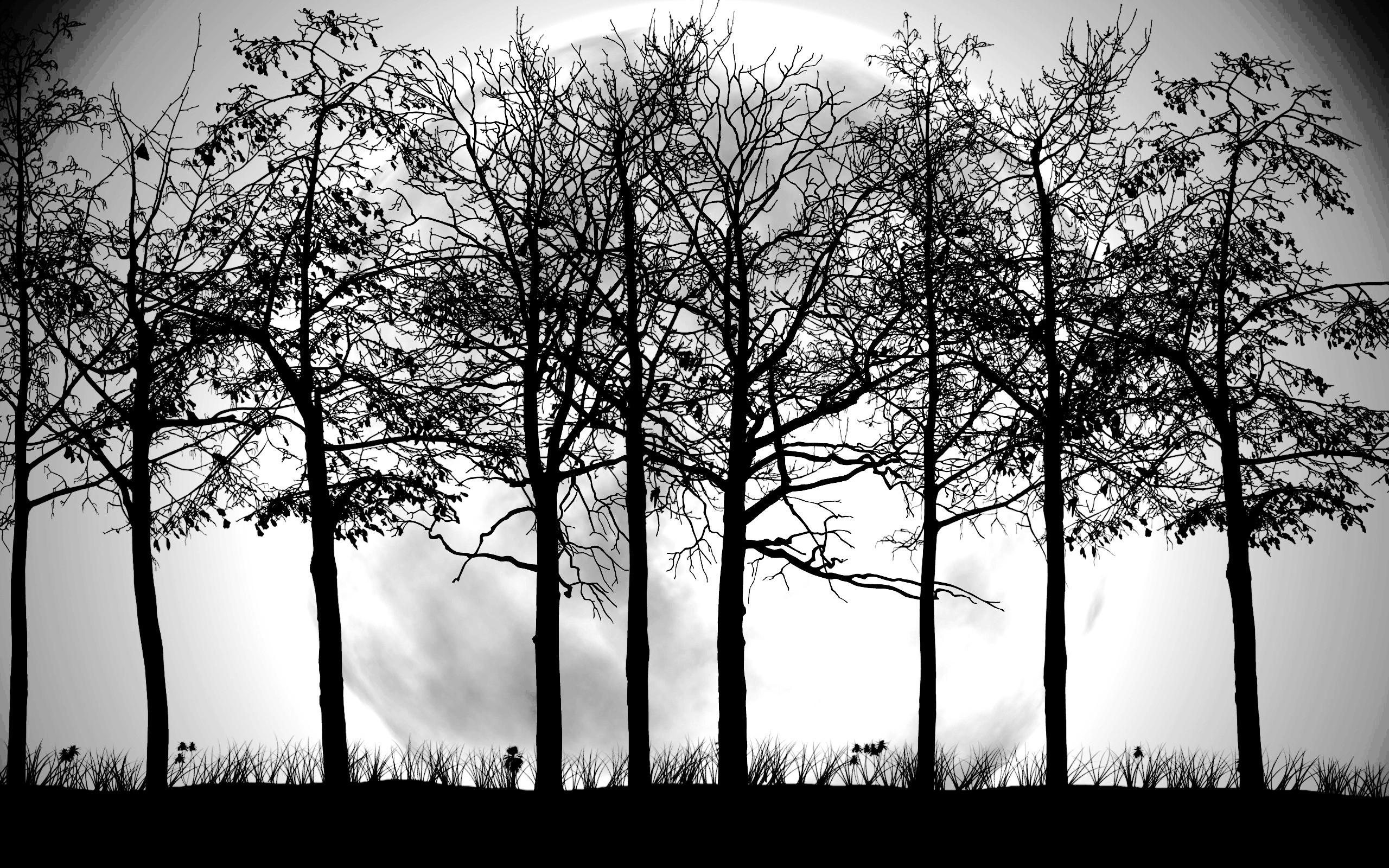 Tree Black and White Wallpapers.