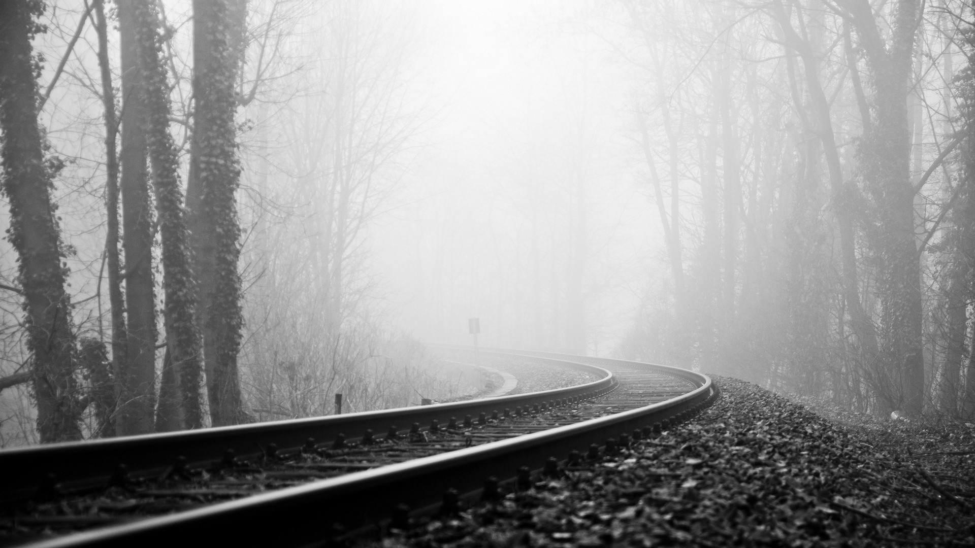 Vehicles train tracks railroad black white trees forest fog haze .