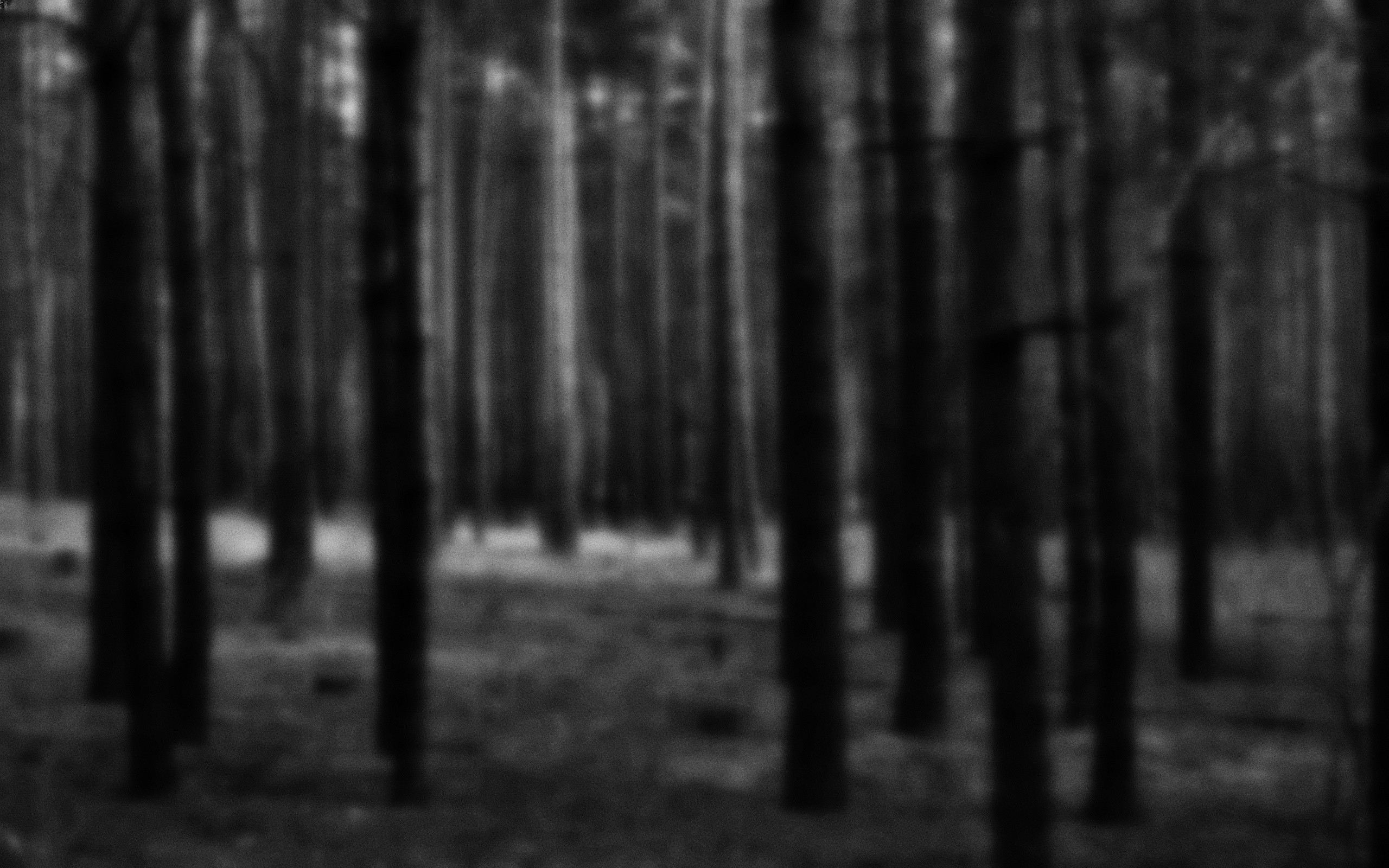 Silent Forest wallpapers and stock photos