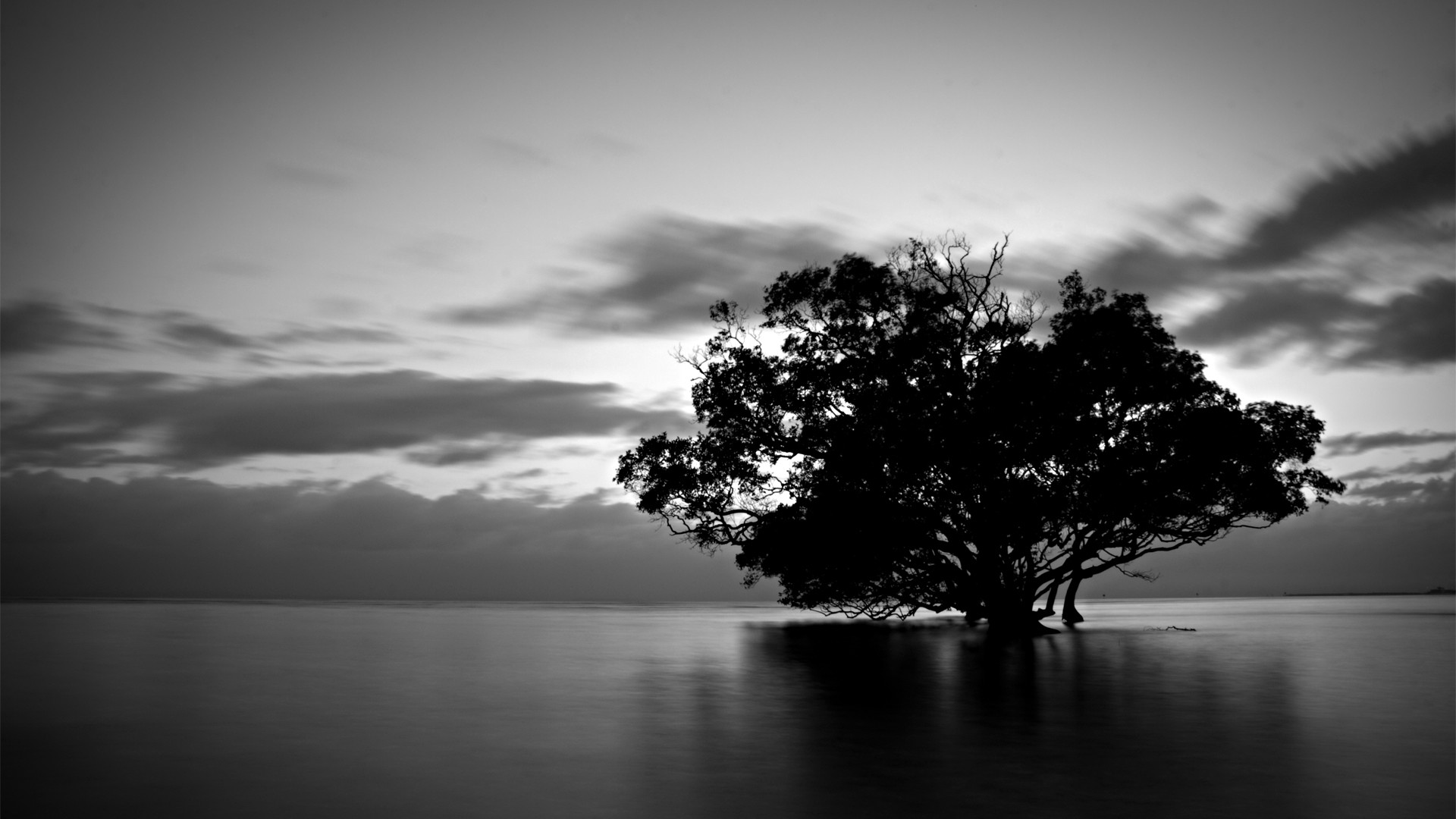 Black And White Nature Photography Hd Background Wallpaper 18 HD Wallpapers