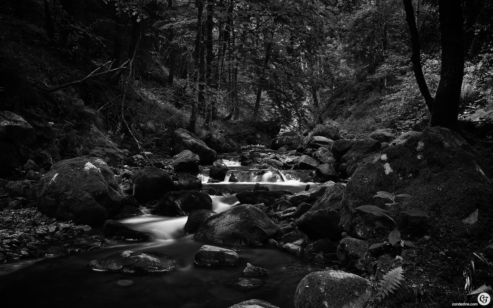 Photography – Black & White Landscape Scenic Forest River Stream Wallpaper