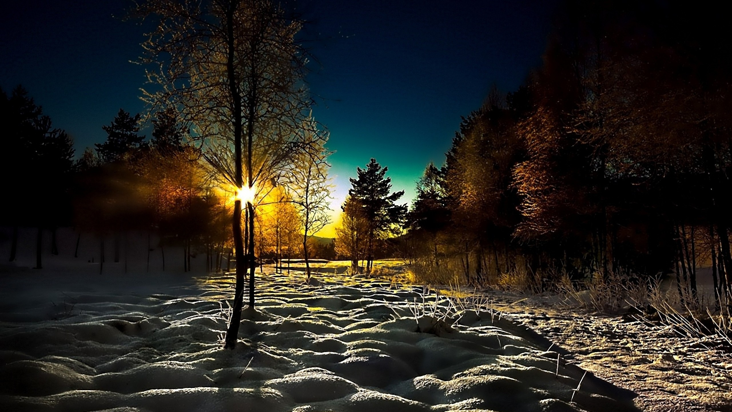 Preview wallpaper winter, wood, young growth, dawn, morning, shadows, cover