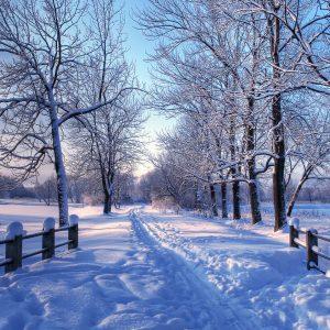 Winter Wallpaper for Desktop Background