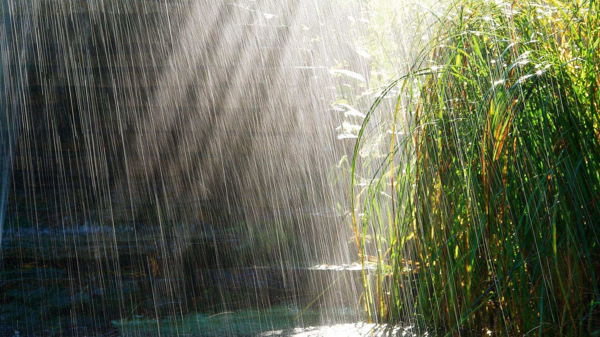 Preview wallpaper heavy rain, rain, light, bushes, summer 1920×1080