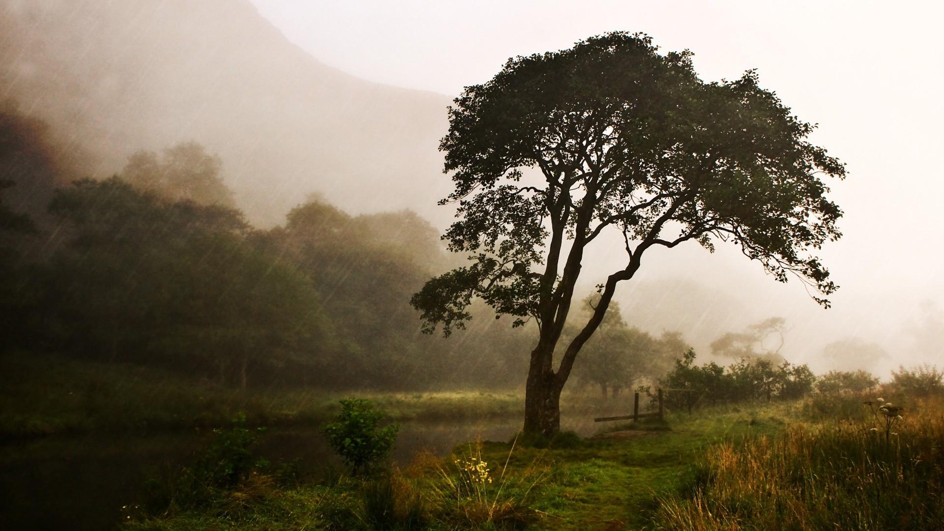 Preview wallpaper rain, tree, streams, bad weather, precipitation, green,  despondency
