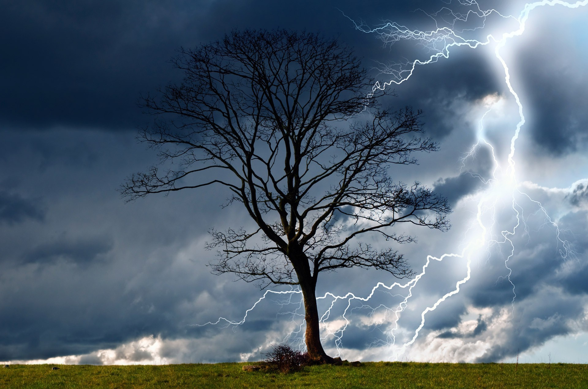 trees, Storm, Sky, Lightning, Rain, Nature, Dangerous, Wind, Wet, Elements,  Landscape Wallpapers HD / Desktop and Mobile Backgrounds