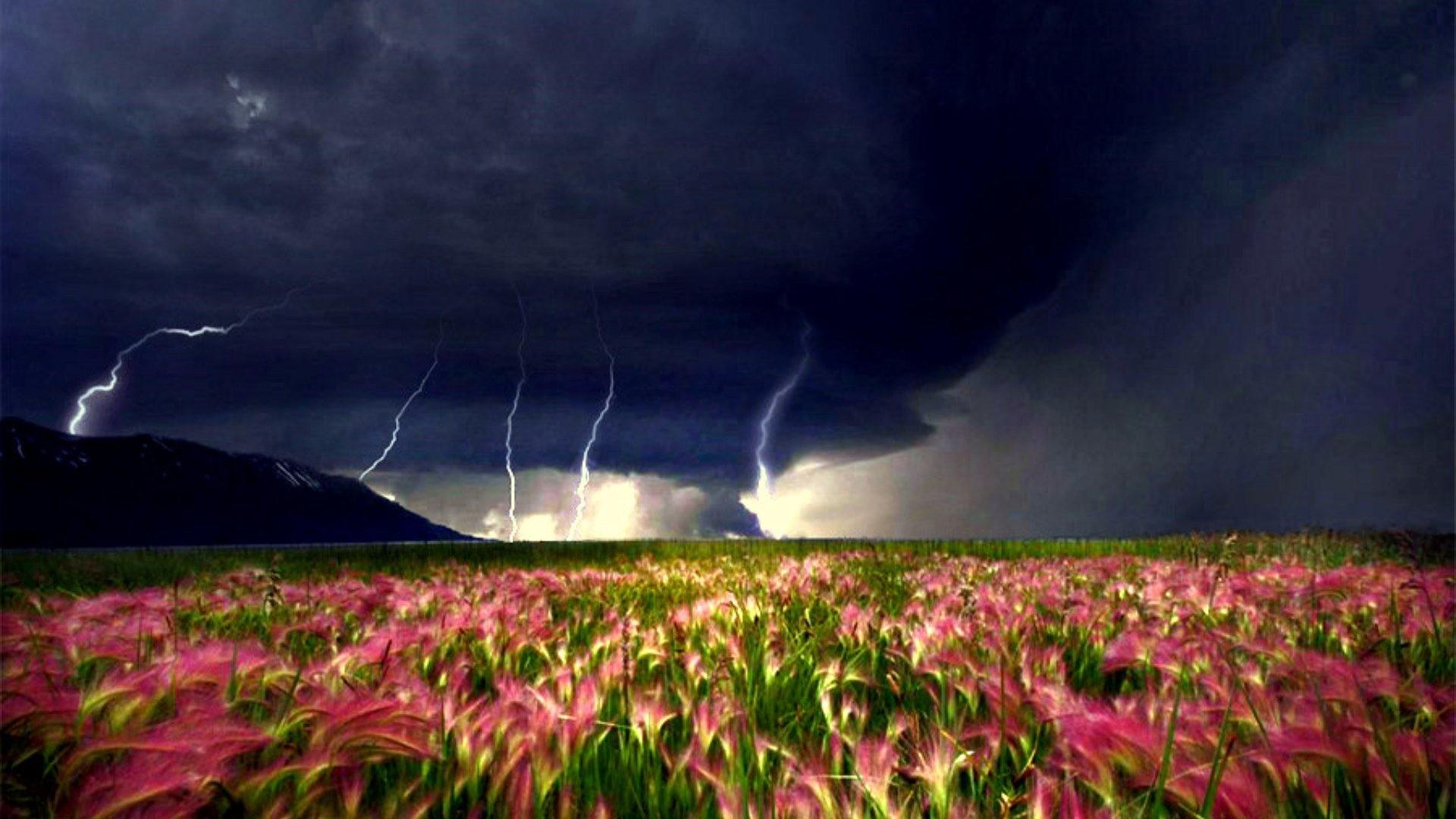 Storm Field Rain Clouds Stormy Moving Tornado Closer Weather Flowers Desktop  Nature Backgrounds Detail