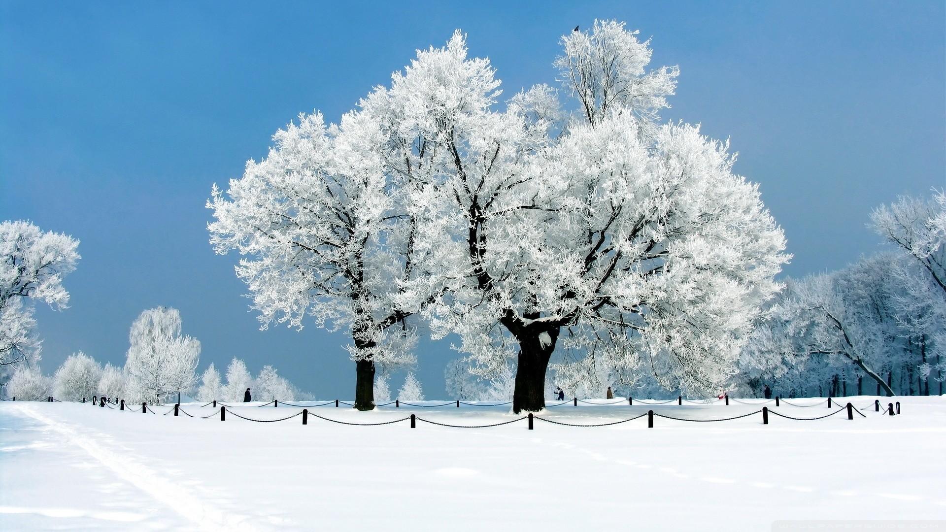 White Tree Winter Wallpaper White, Tree, , , Winter
