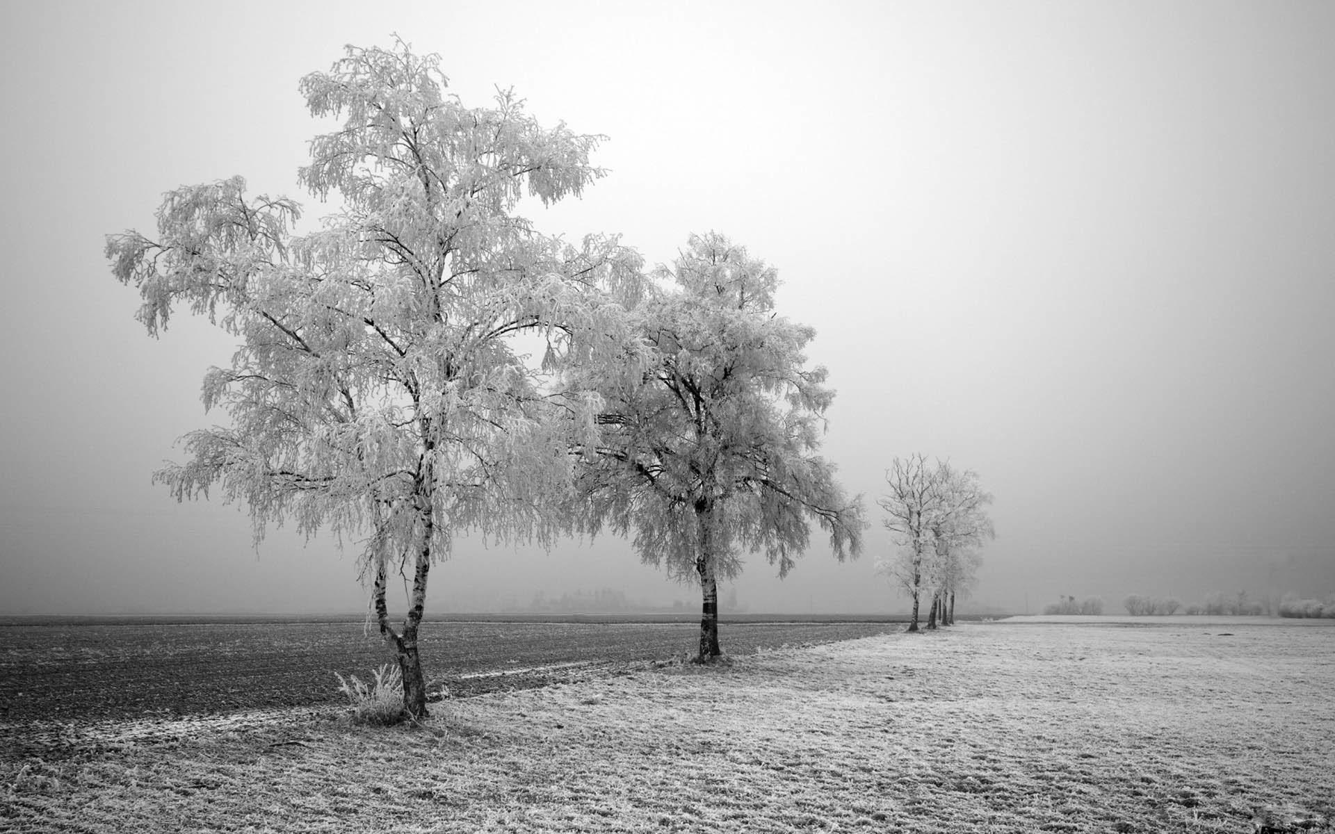 Winter Wallpaper 8