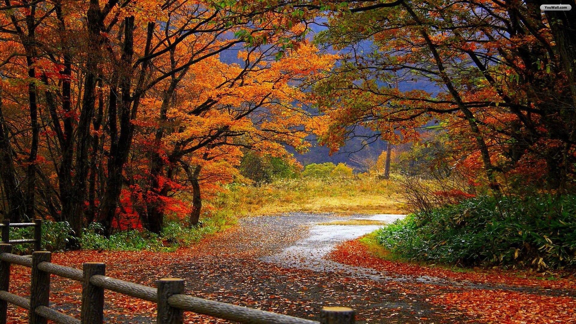 Autumn Scenery Wallpaper – wallpaper,wallpapers,free wallpaper .
