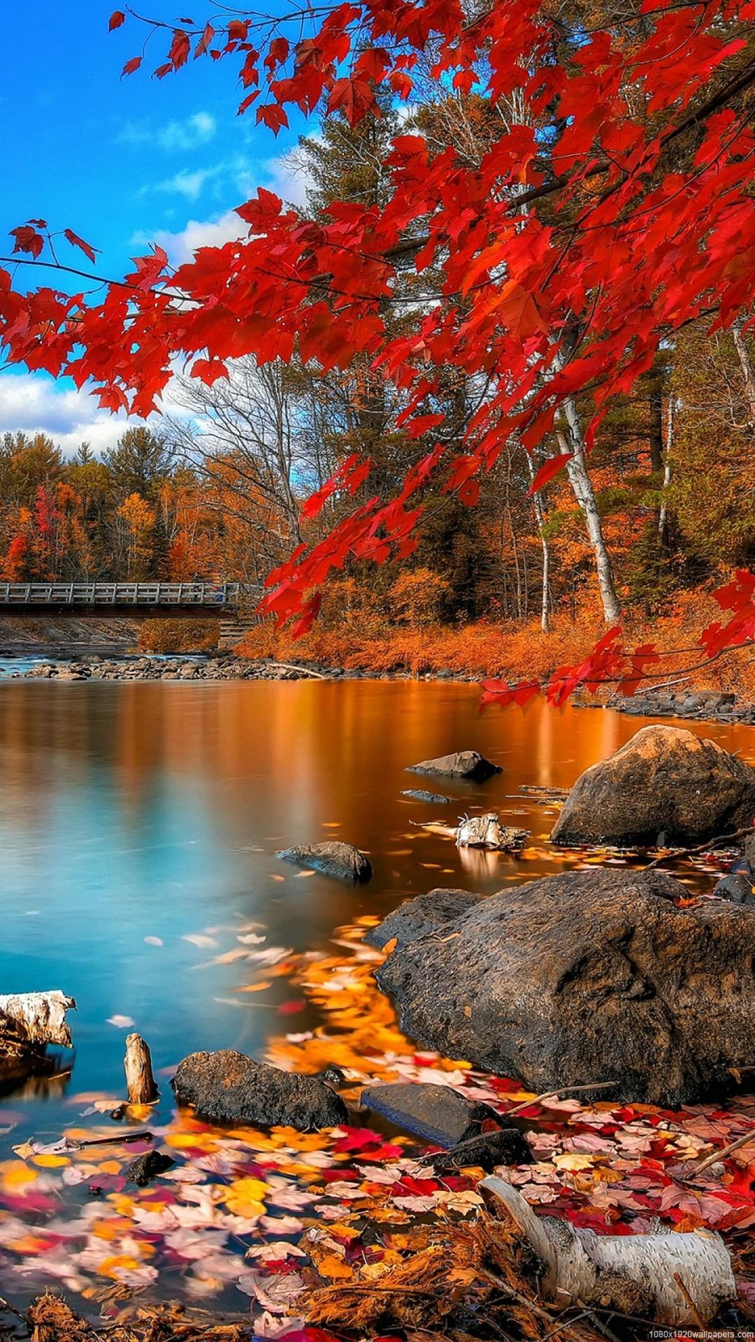 Autumn/fall foliage reflected on pond