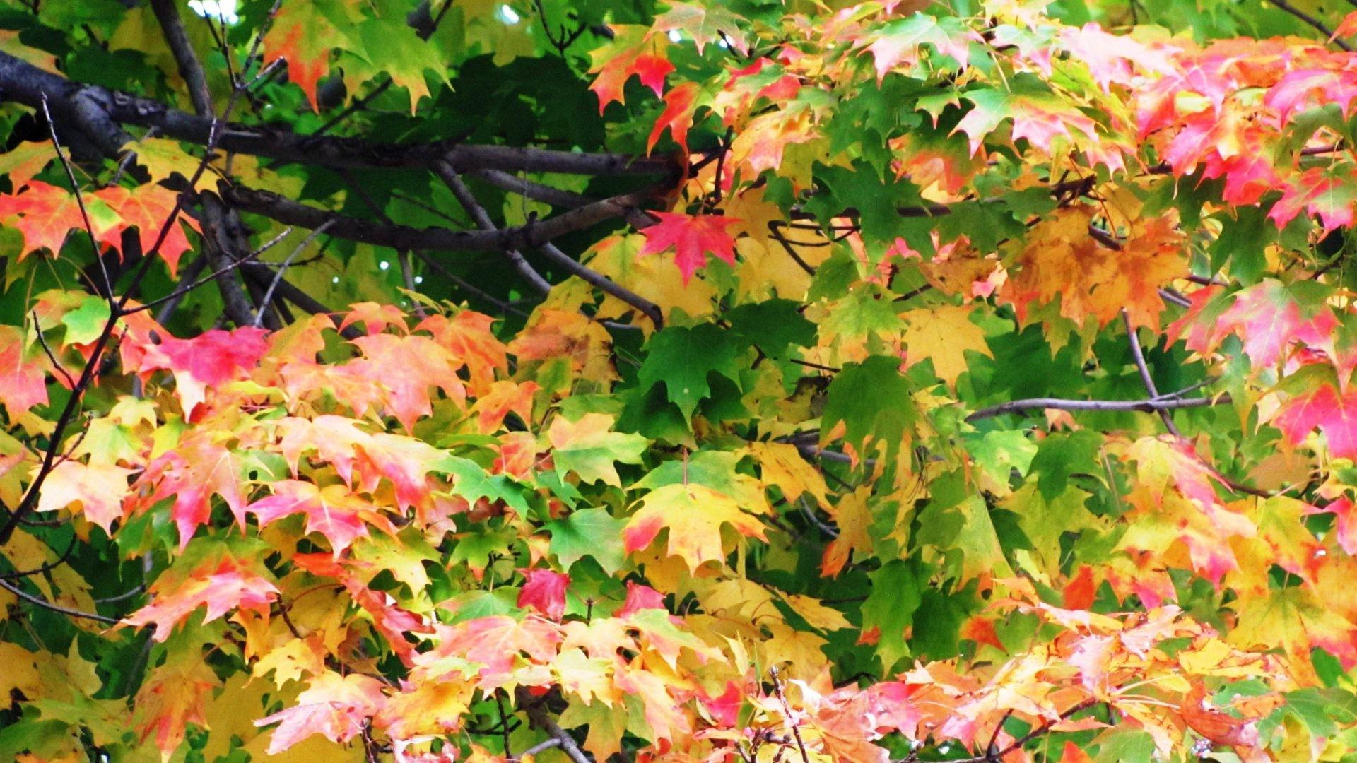 Fall Tag – Beautiful Orange Land Red Lake Fall Road Foliage Landscape  Scenery Pink Bridge Forest