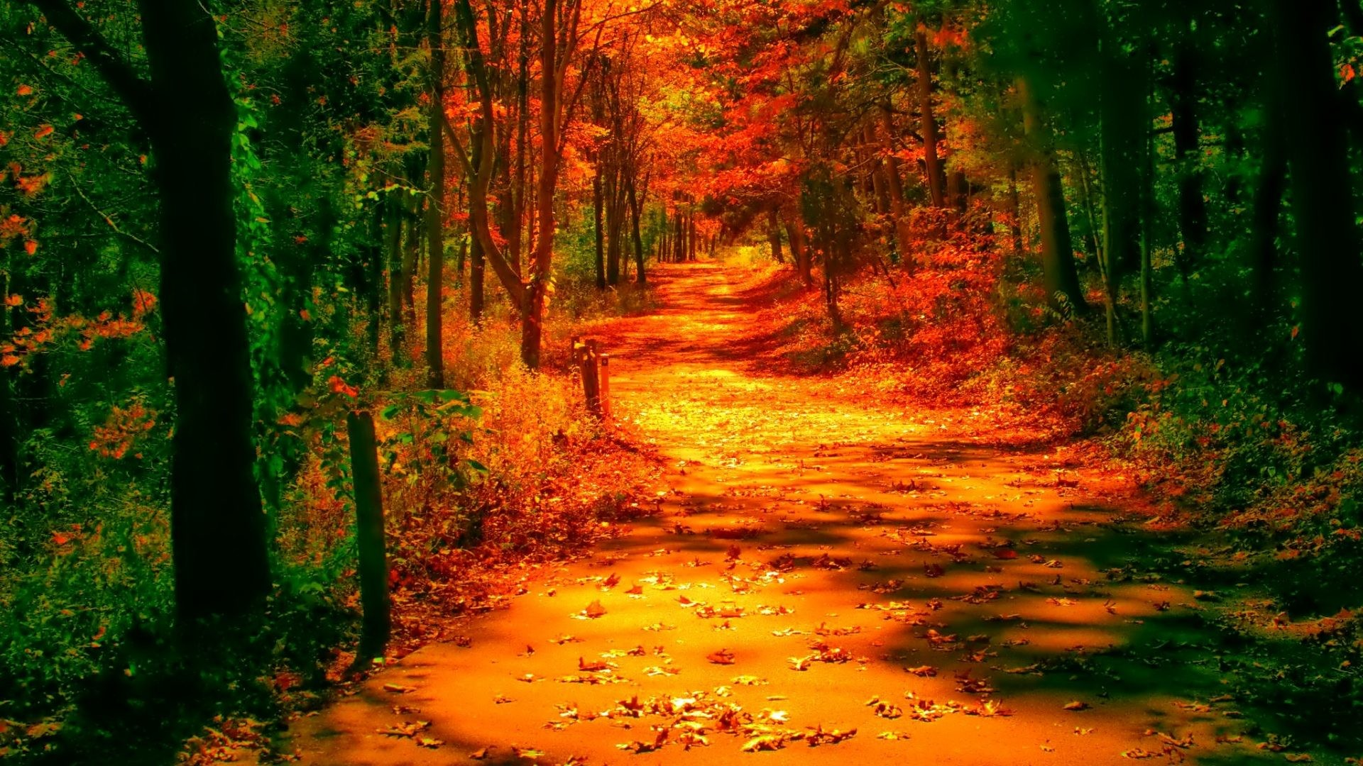 October Tag – Foliage Reflection Nice Golden Branches Colors Mirrored  Nature Fall Colorful Beautiful Autumn Tree