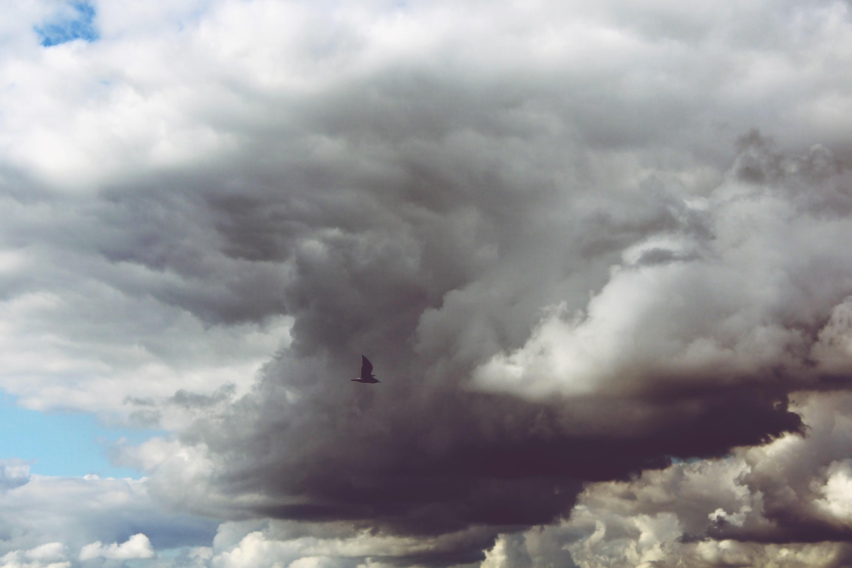 black flying bird near gray cloudy sky