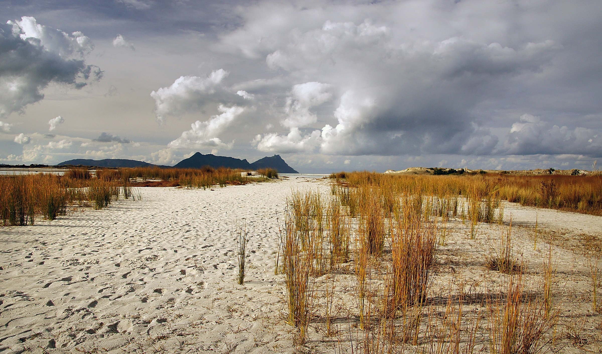 gray sand with brown grass under cloudy sky