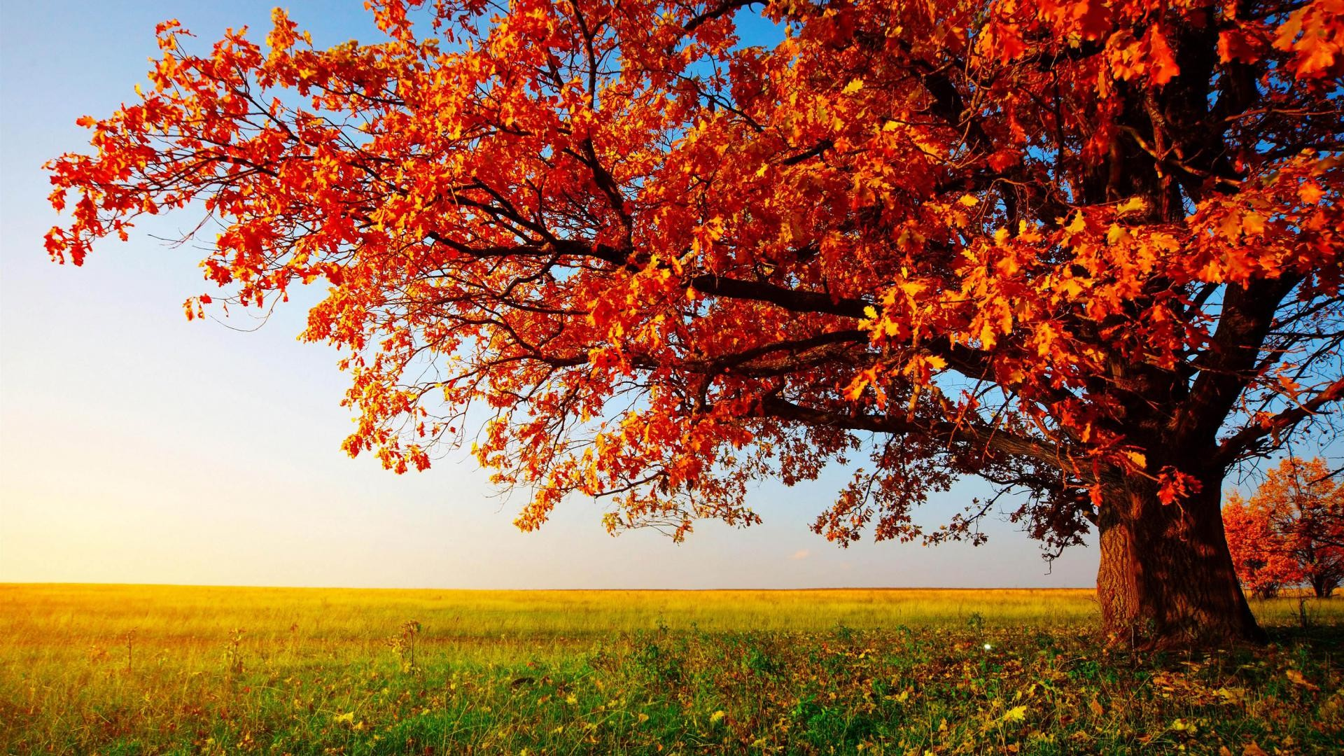 Beautiful Autumn Wallpaper For Interior Wall Decor Idea: Autumn Leaves  Wallpaper With Nice Garden View