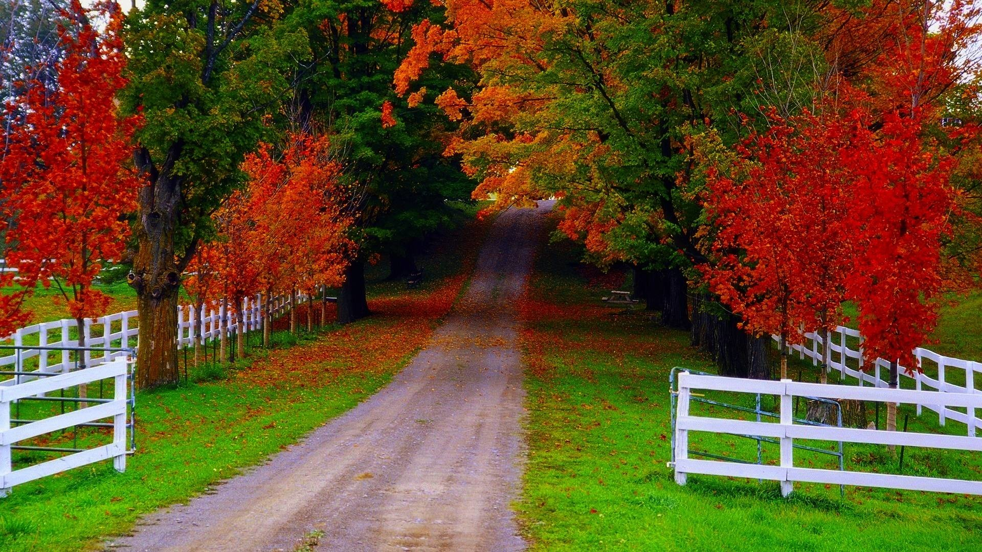 Wallpapers For > Cool Fall Wallpapers For Desktop   Nature Beautiful  Pictures   Pinterest   Fall wallpaper and Nature wallpaper