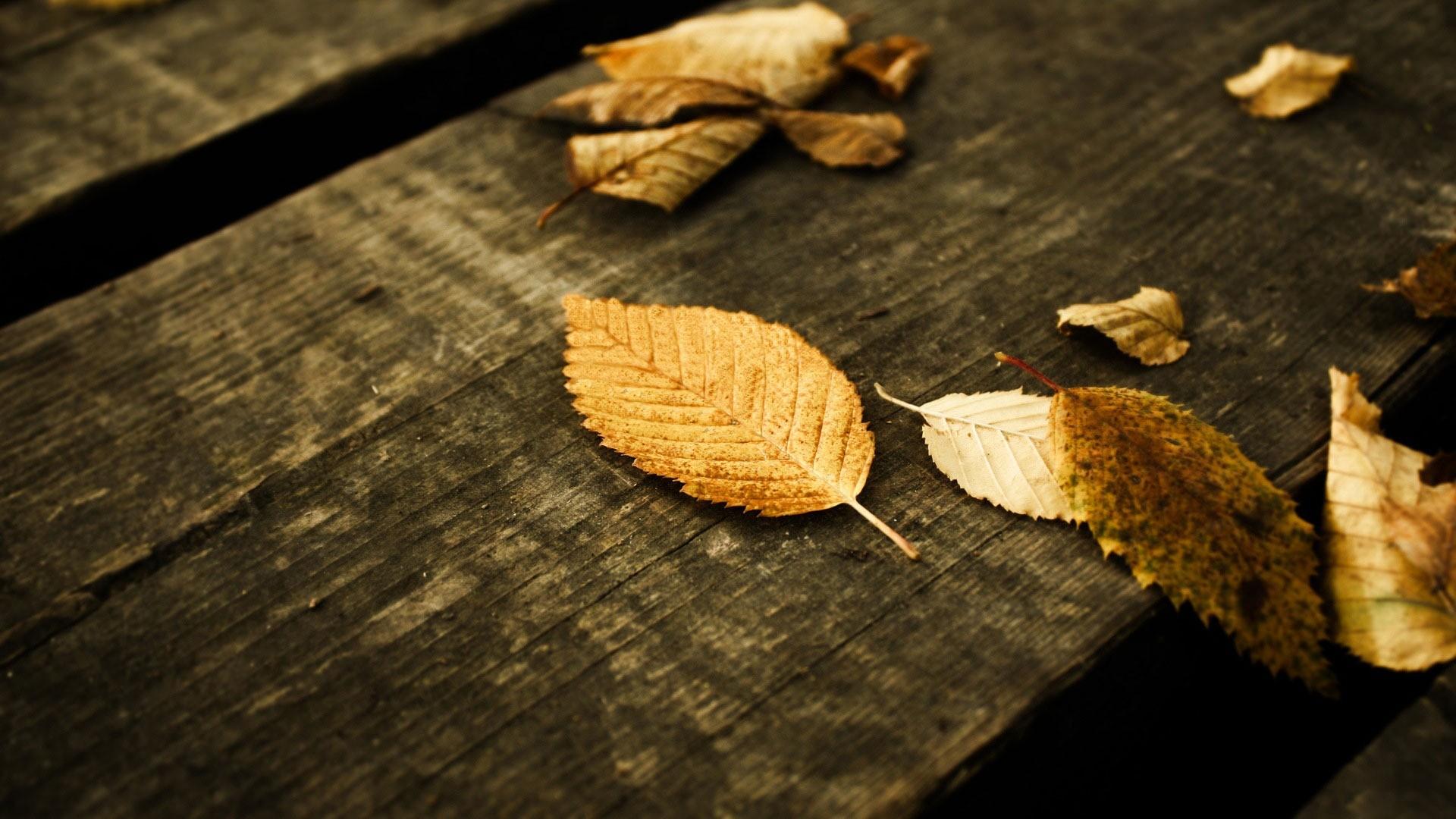 Sfondi Desktop gratis · Animali e Natura · Natura Autumn wallpapers –  fallen leaves