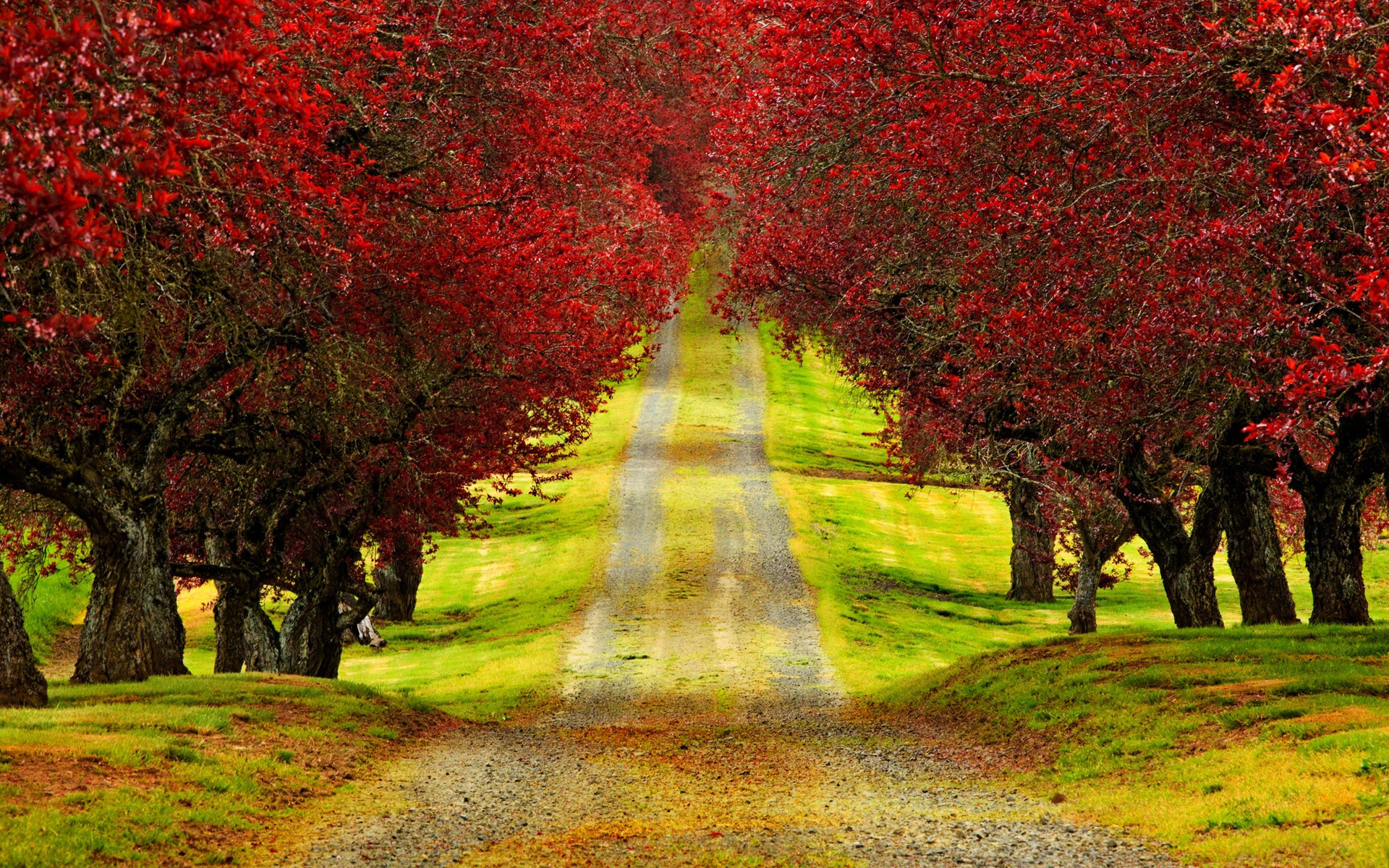 Amazing Roads with Trees   Red Trees Autumn Road HD Wallpaper