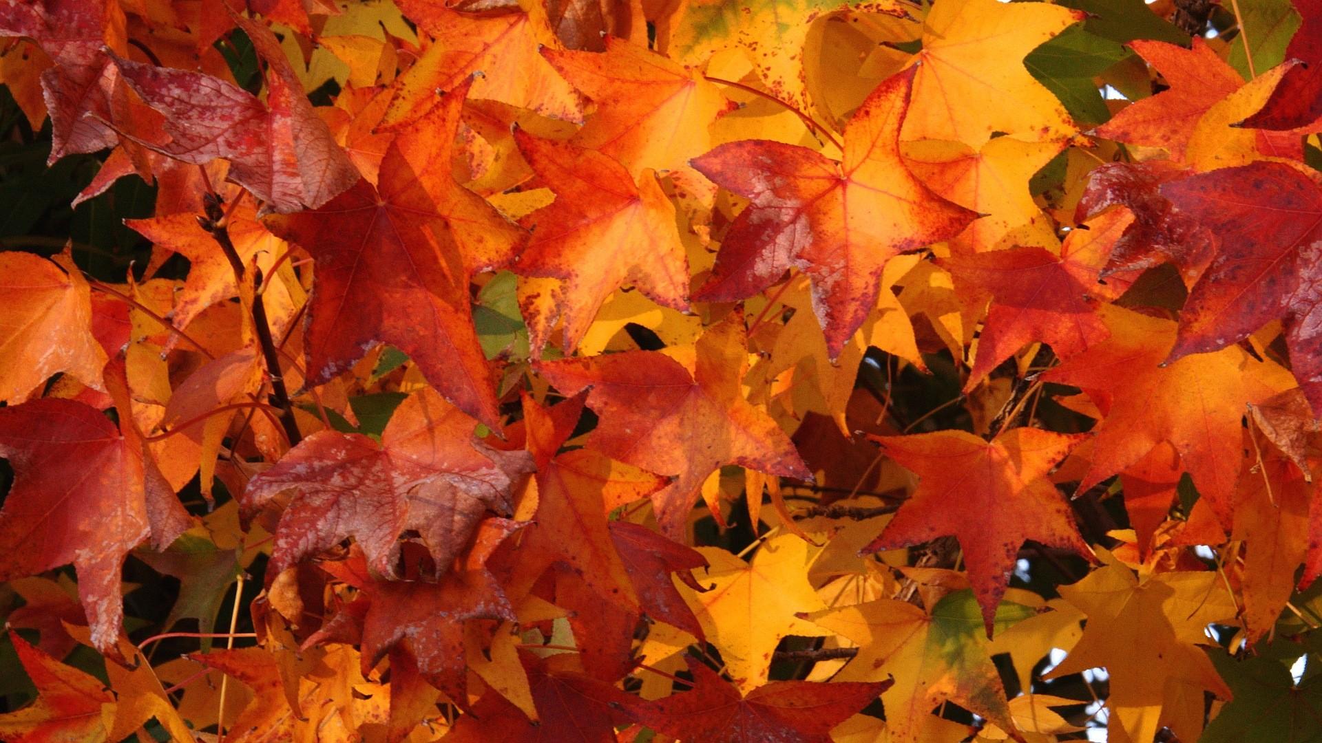 Download: Fall Colors HD Wallpaper