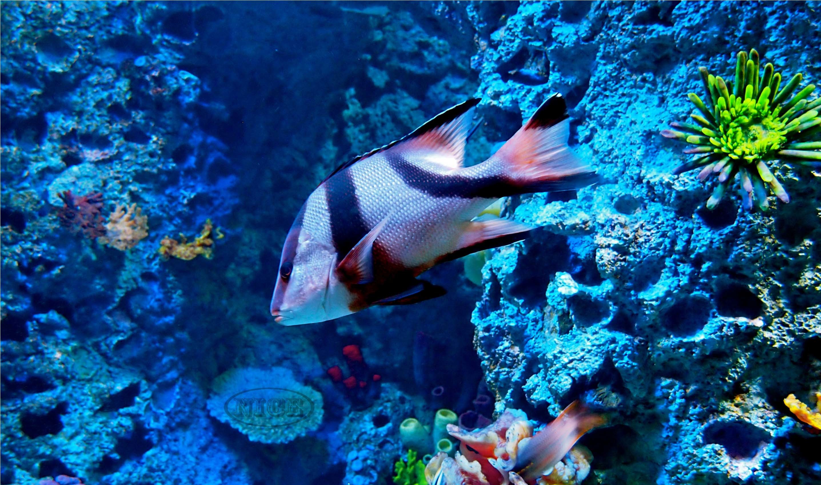 Images For > Hd Ocean Life Wallpapers
