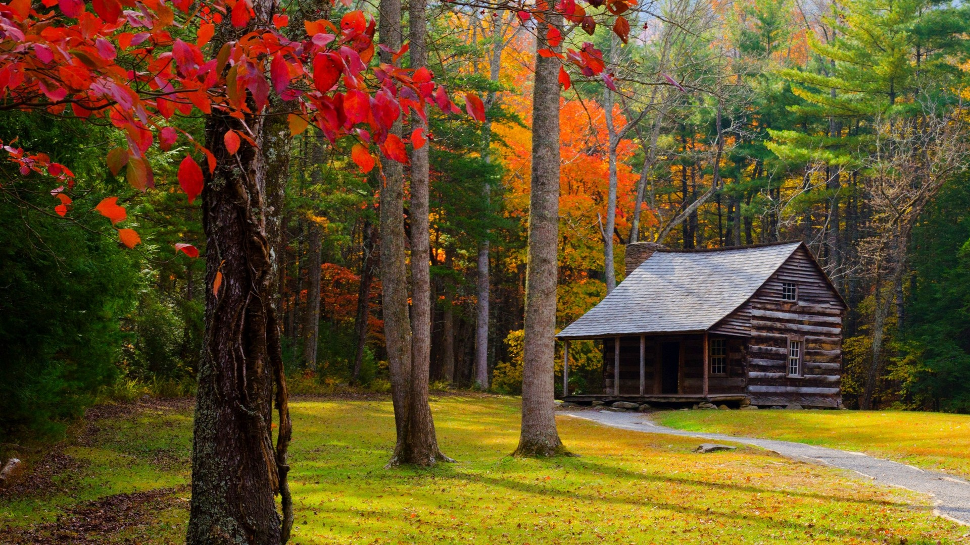 Preview wallpaper autumn, trees, forest, building, grass 1920×1080