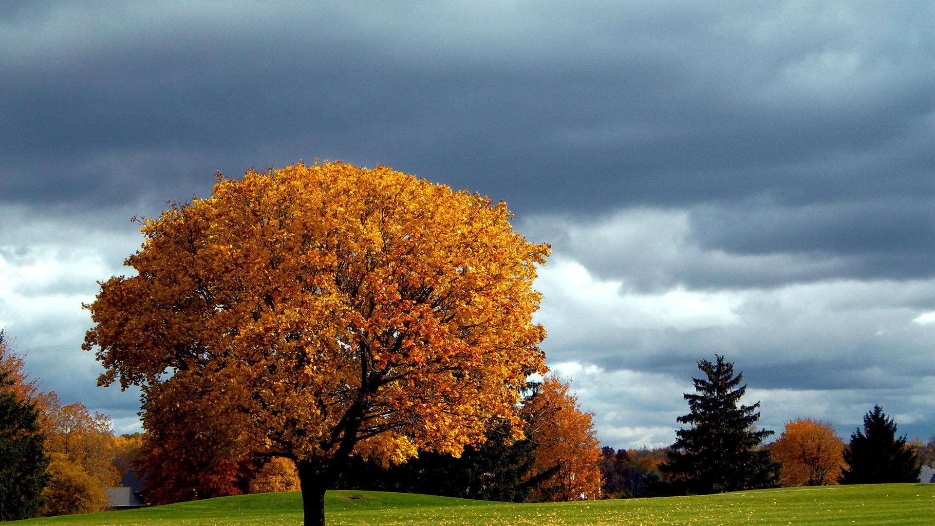 Autumn · Autumn trees   autumn wallpaper …