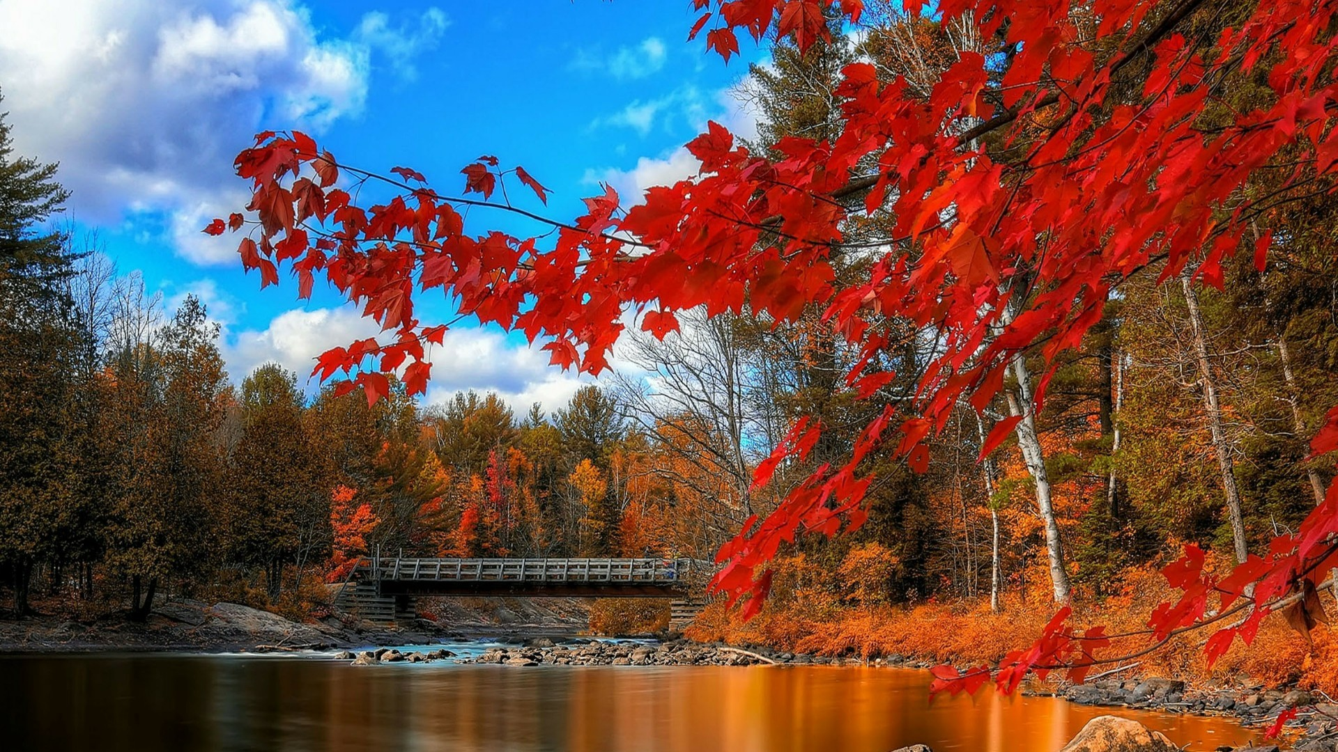 Title. Red autumn tree …
