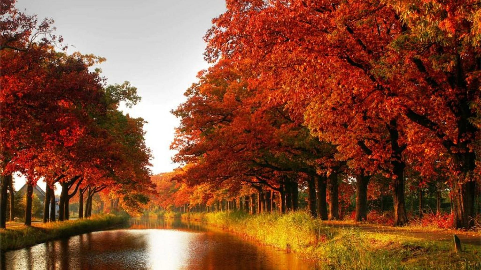 Maple trees autumn red leaves canal river forest [1920×1080] Need #iPhone  #6S #Plus #Wallpaper/ #Background for #IPhone6SPlus? Follow iPhone 6S Plu…