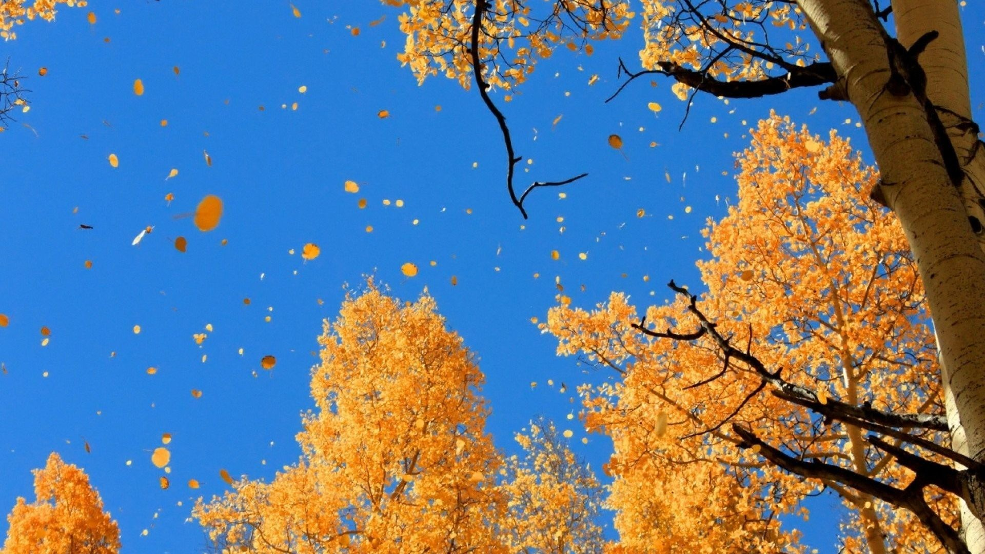 Landscape Tag – Forest Nature Fall Leaves Autumn Tree Landscape Wallpaper  Of For Desktop for HD
