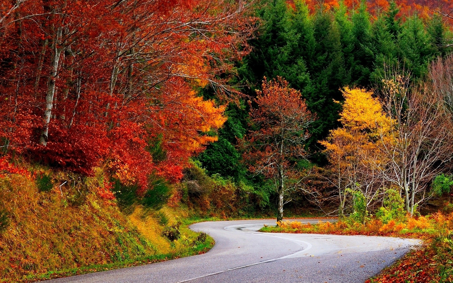 Colorful Autumn Trees & Street wallpapers   Colorful .