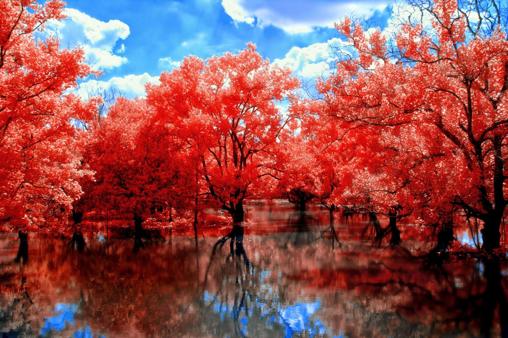 https://www.walllopers.com/wp-content/uploads/ · Red WallpaperNature  WallpaperGreen TreesPink TreesAutumn …