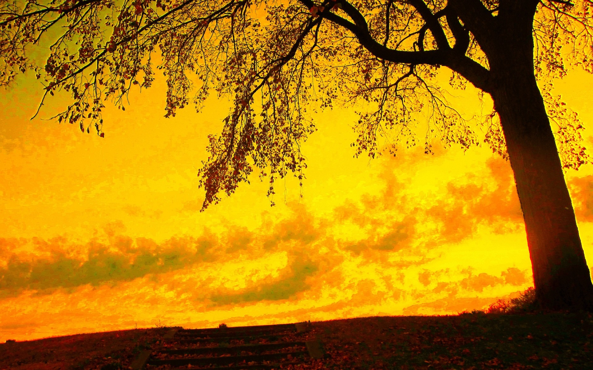 Autumn trees · Yellow Wallpapers in Best Resolutions   Danika  Loesch SH.VM Backgrounds Collection
