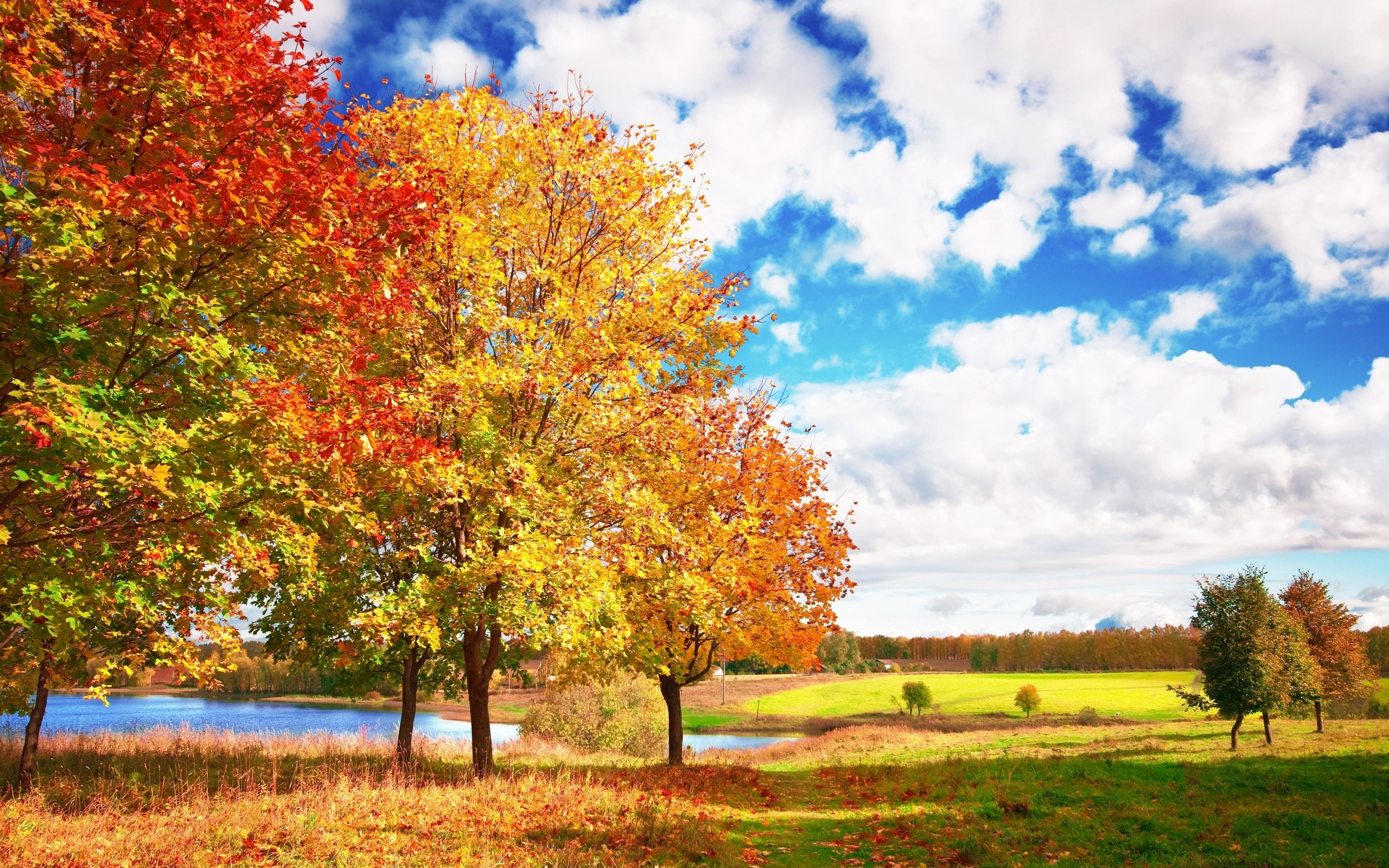 Wallpaper autumn, trees, colors, palette, bright, leaf fall