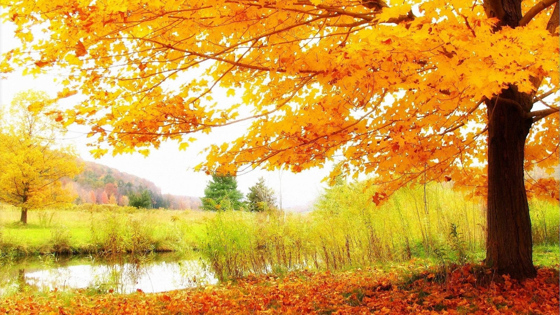 Autumn Tag – Nature Trees Leaf Landscape Leaves Autumn Awesome Photos Hd  for HD 16: