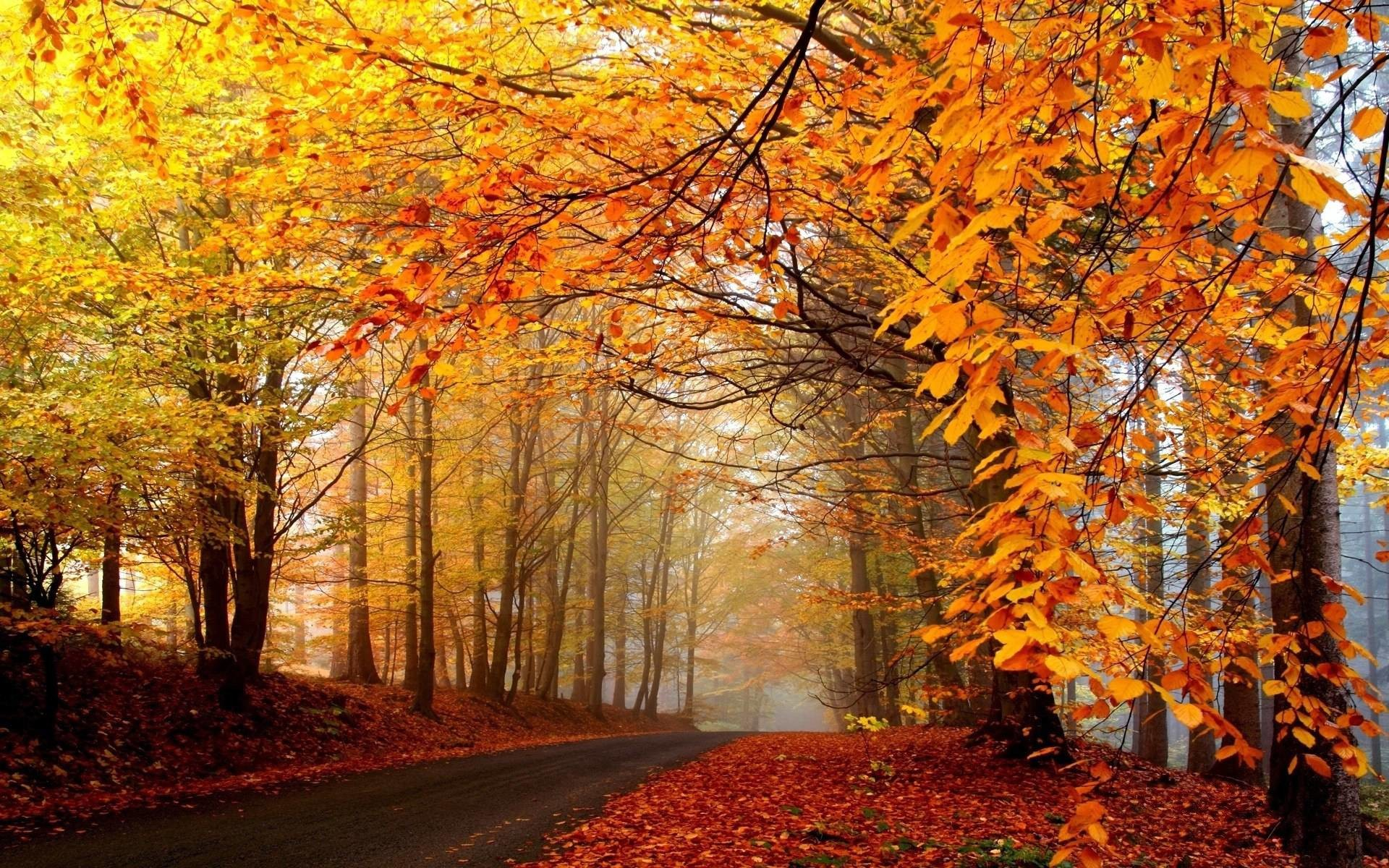 Wallpapers For > Fall Trees Background