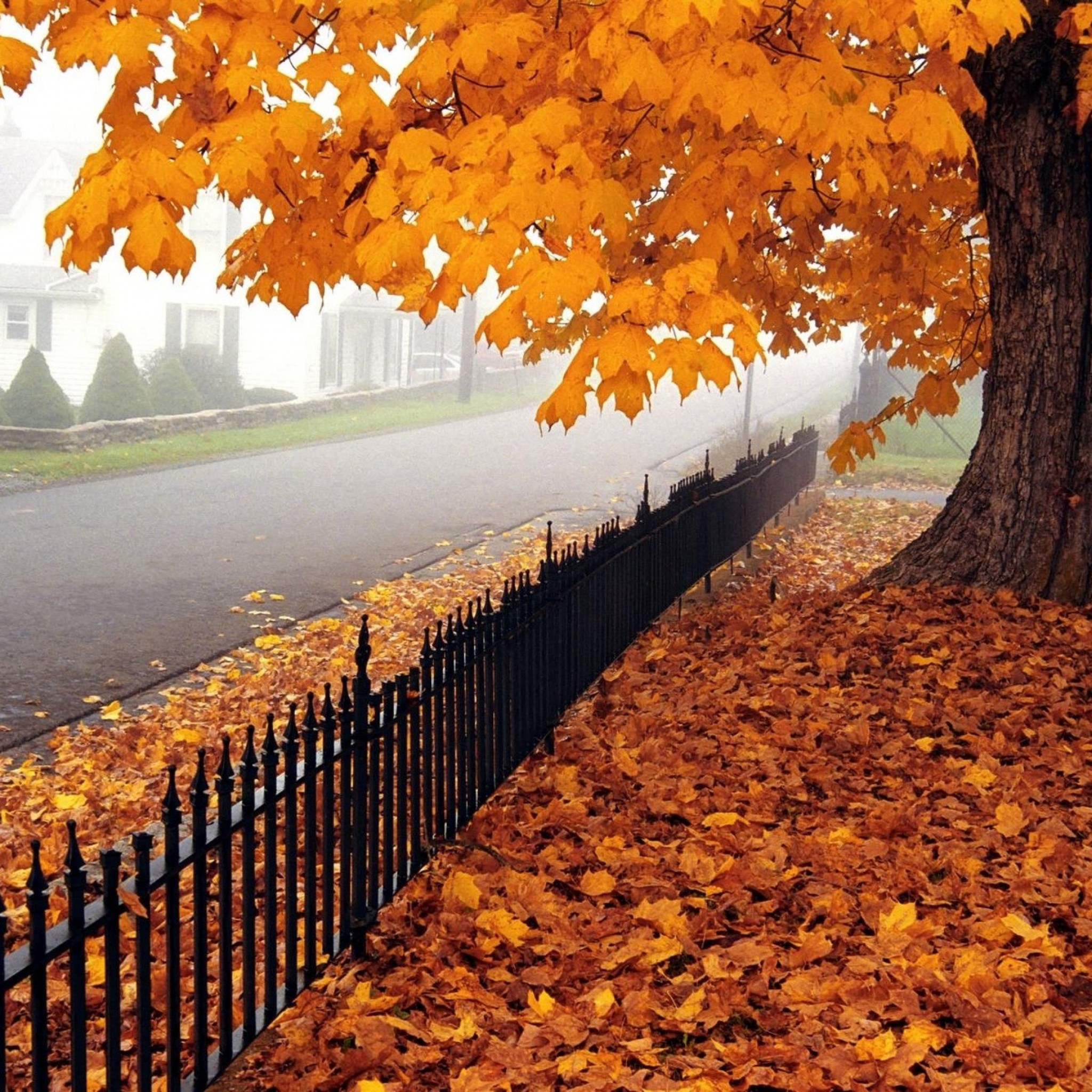 Wallpaper autumn, tree, leaves, fence, fencing, west virginia