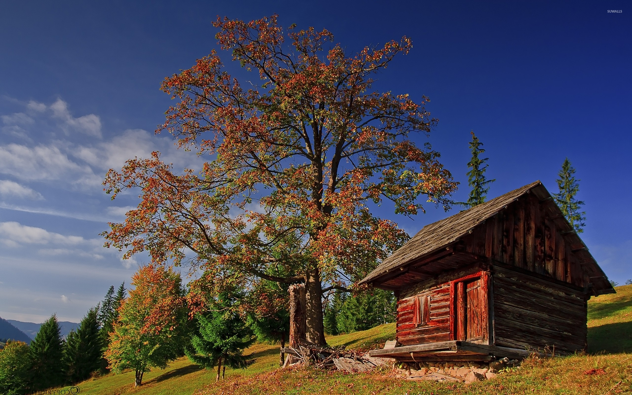 Old small wooden house under an autumn tree wallpaper
