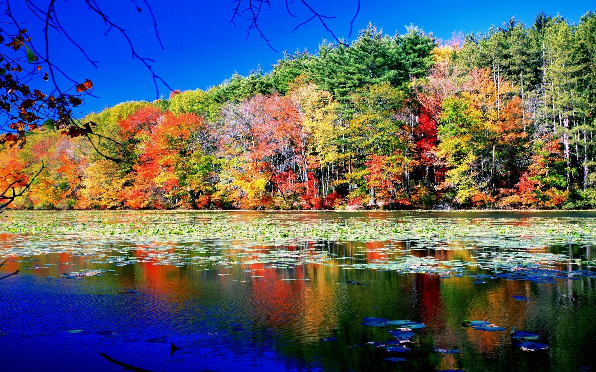 Colourful Autumn Beauty Wallpaper