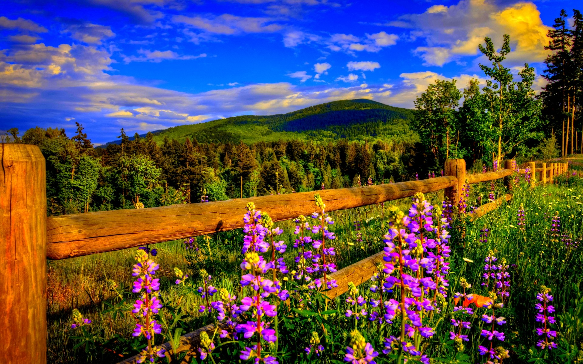 spring wallpapers category of free hd wallpapers springtime .