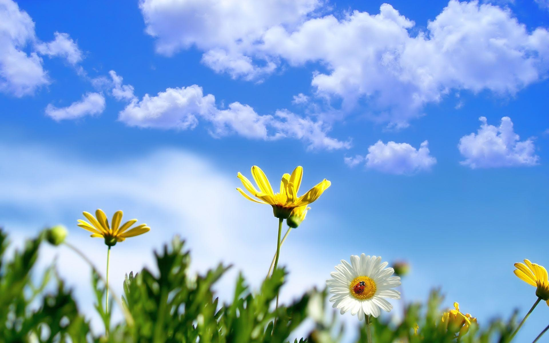 Sunny Springtime Wallpaper Wide or HD   Flowers Wallpapers
