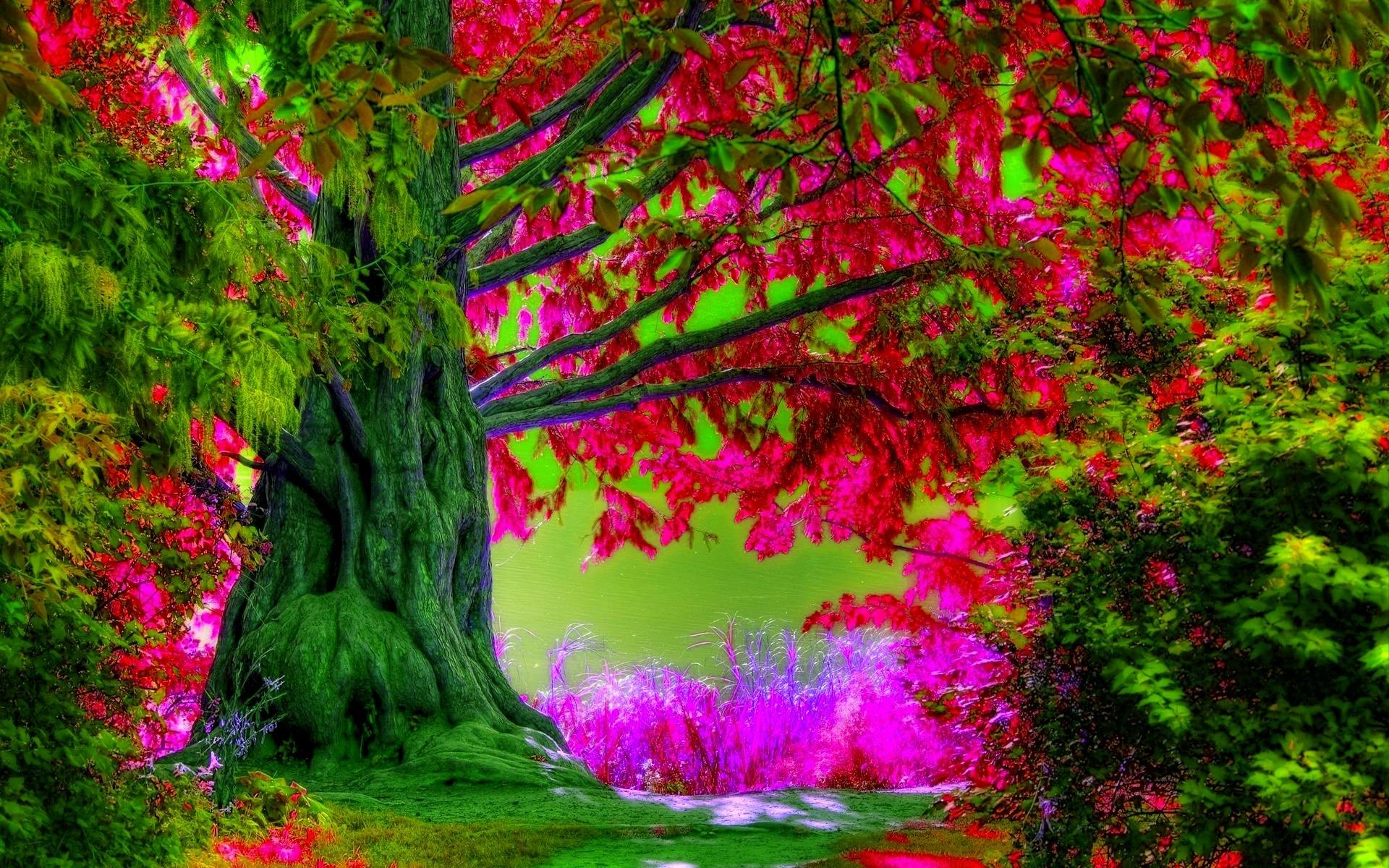 Spring Trees Wallpaper Desktop Widescreen 2 HD Wallpapers   Hdimges.