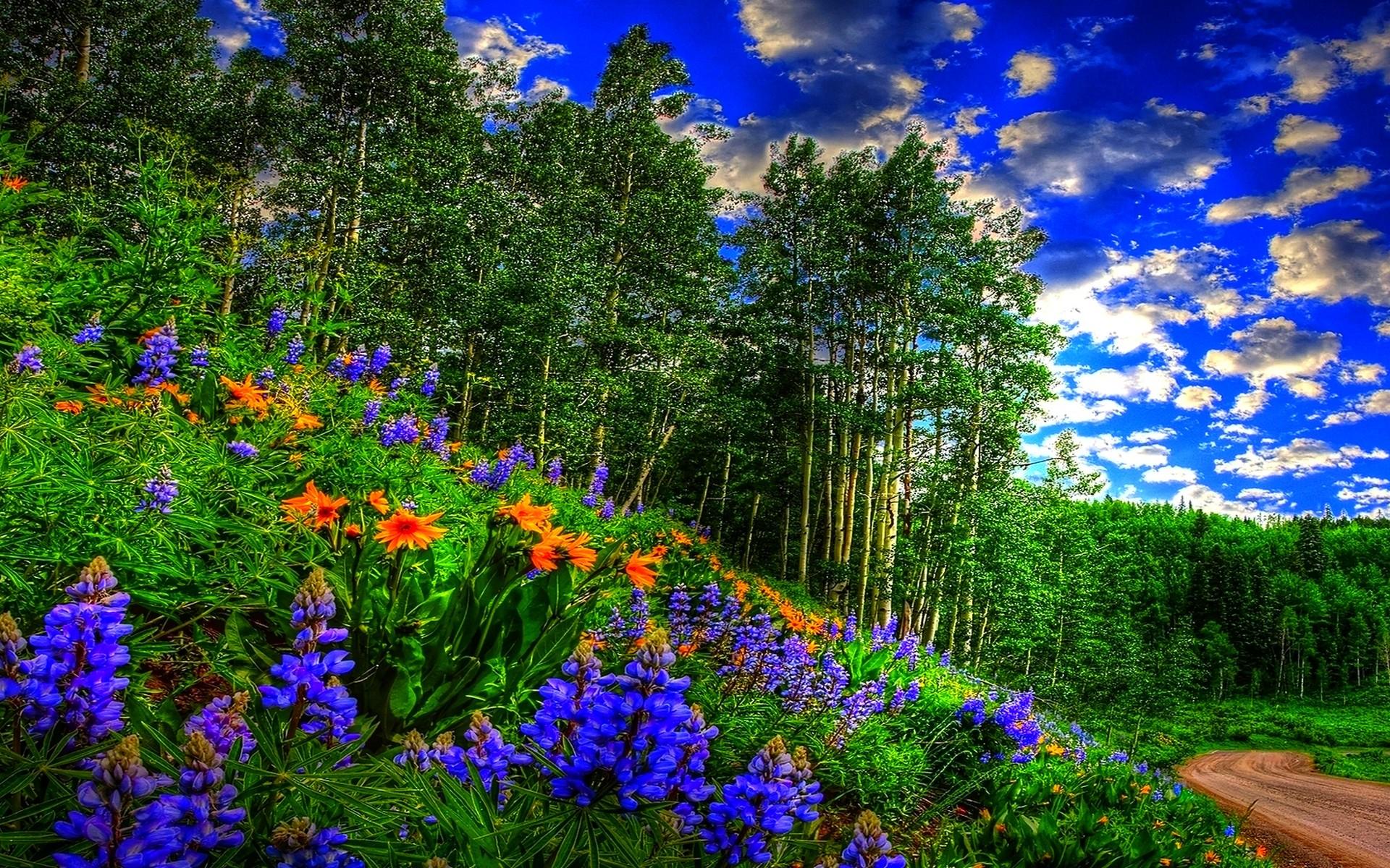 Spring Forest Wallpaper #893625 Spring Forest Wallpaper #893678 Spring .